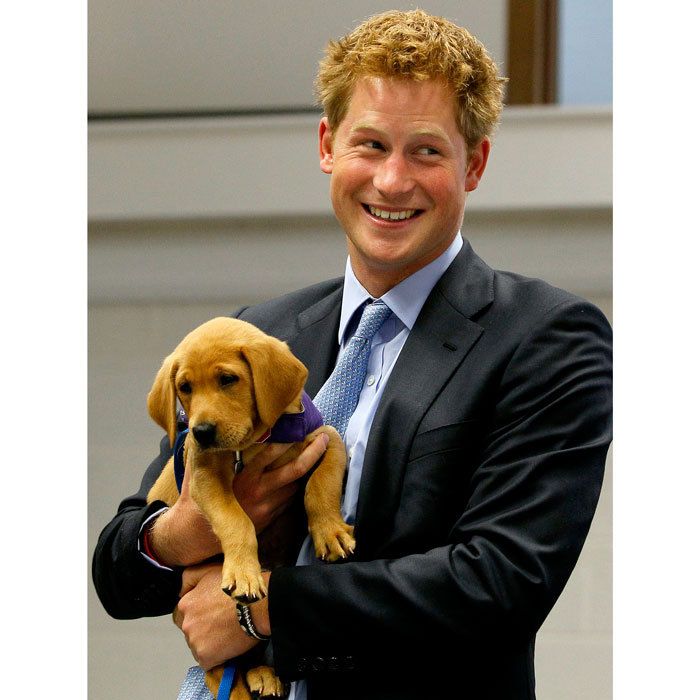 Our hearts melted after seeing the royal cradle an eight-week-old puppy named Veyron during his 2010 visit to the Canine Partners Training Centre.