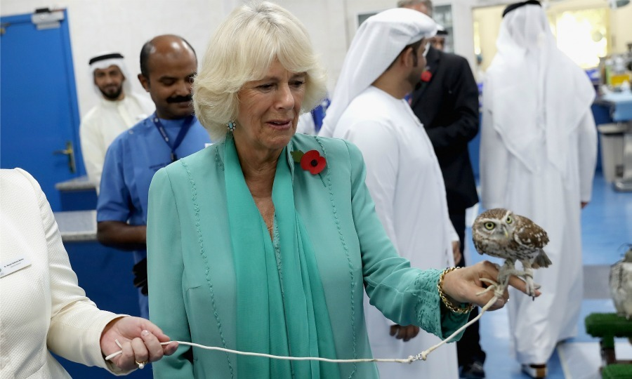 Camilla paid a visit to the Abu Dhabi Falcon Hospital, which is the largest Avian hospital in the world. While touring the facilities, the Duchess of Cornwall heard about the history of falconry and met with some children who were learning about the different aspects of Bedouin culture.