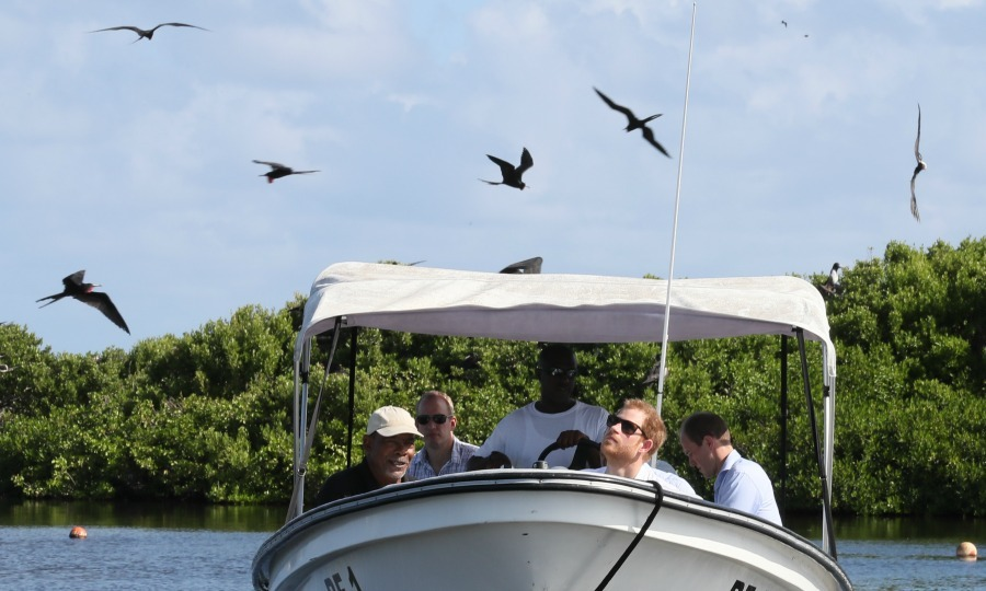 Harry took a trip to Antigua's sister island of Barbuda. While on the island, Harry took a boat tour of the mangroves to observe the largest colonies of frigate birds in the world. 