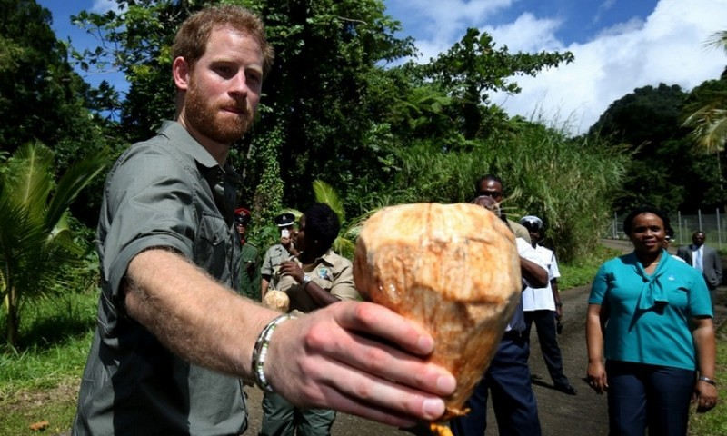 Prince Harry handed out coconuts to beat the heat on the Vermont Nature trail. 