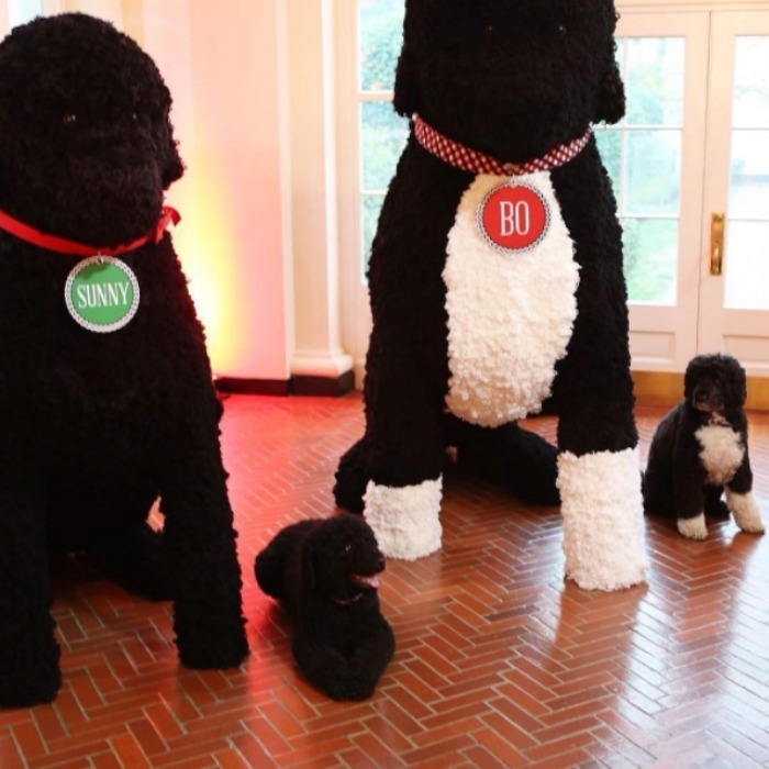 Sunny and Bo Obama posed next to their enormous replicas made out of 25,000 yarn pom-poms.