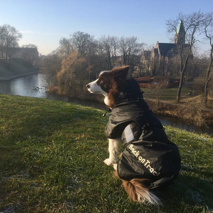The Danish Royals' official Instagram page unveiled this photo of Crown Prince Frederik and Crown Princess Mary's pup, Ziggy, enjoying the 'frosty weather' in Kastellet, Copenhagen. The scenic snapshot is credited to none other than the Crown Princess herself.