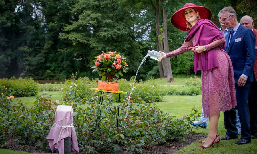 Queen Maxima looked as pretty as a rose as she watered flowers during her visit to the Dutch Rose Association's National Symposium at the Rosarium in Winschoten.