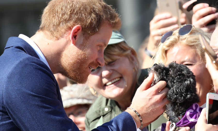 On his second day in Toronto, Prince Harry visited the Centre for Addiction and Mental Health, where he met with doctors and researchers to learn more about their programs. Afterward, the royal greeted a large crowd of fans, including one very adorable puppy! 