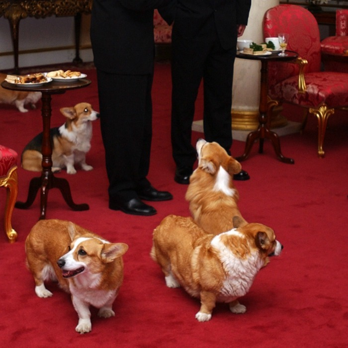 <b>4. The Queen's corgis have free reign of the place</b>