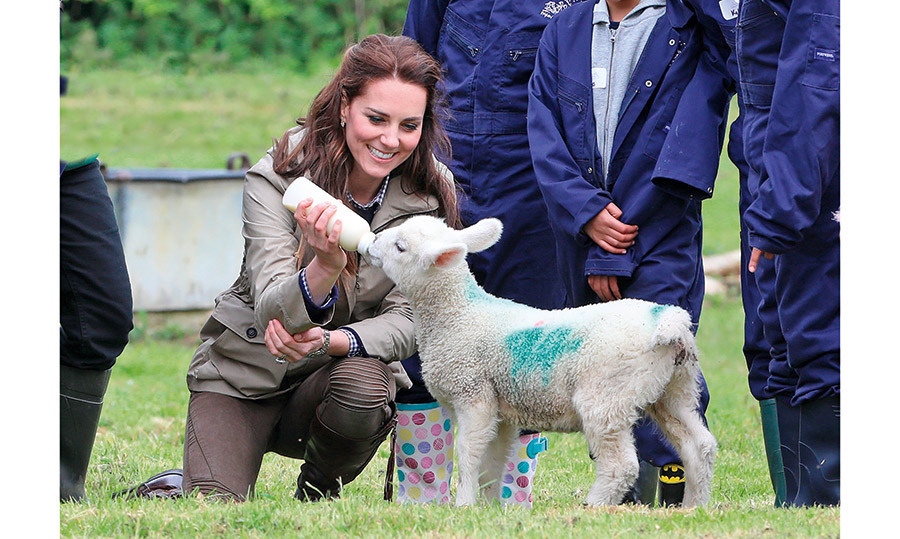 KATE'S HAY DAY