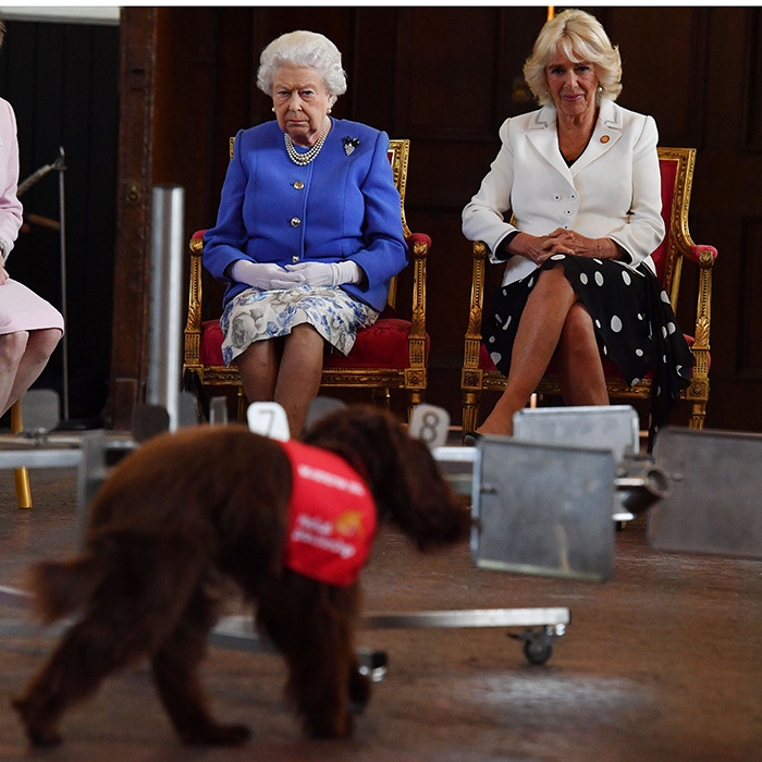 Joined by Duchess Camilla, the Queen was a bit more serious as she paid close attention to a demonstration of a dog sniffing out bladder cancer during the Medical Detection Dogs event.