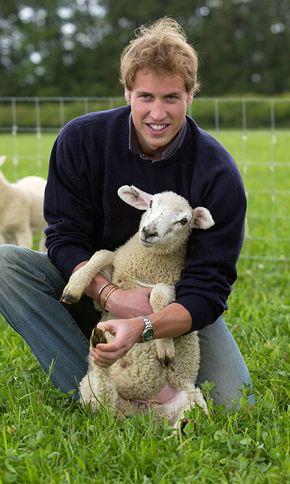 What's cuter than a handsome young Prince? A handsome young Prince with a lamb! Here Prince William examines sheep at the organic farm on the Highgrove Estate, Prince Charles's family home in Gloucestershire, England. 