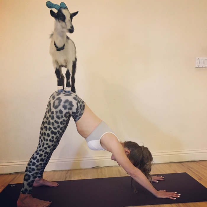What's a better way to celebrate your 45th than goat yoga? Kate Beckinsale was joined by her ex Michael Sheen and their 19-year-old daughter Lily Sheen as they participated in the unique activity.